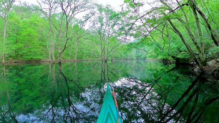 幻想的な水没林の間を行く 魅惑のカヌーツアー  にしわが通信 Vol.50